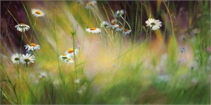 """Ludmila Yudina Hand Signed and Numbered Limited Edition Artist Embellished Canvas Giclee: """"Camomille Field"""""""