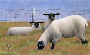 """Alex Colville Hand Signed and Numbered Limited Edition Print """"Three Sheep"""""""
