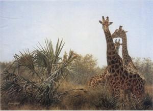 "Brian Jarvi  Limited Edition Print: ""Giraffes and Lala Palms"""