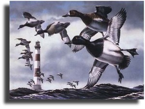 "Scot Storm Limited Edition Giclee on Paper:""Bluebills"""