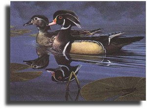 "Scot Storm Limited Edition Giclee on Paper:""Wood Ducks"""