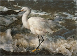 """Carl Brenders Hand Signed and Numbered Limited Edition Fine Art Print:""""Island Shores - Snowy Egret """""""
