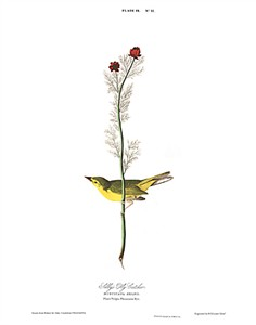"John James Audubon Limited Centennial Edition Giclee on Paper:""Hooded Warbler"""