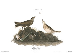 "John James Audubon Limited Centennial Edition Giclee on Paper:""American Pipit"""