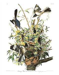 "John James Audubon Limited Centennial Edition Giclee on Paper:""Northern Mockingbird"""