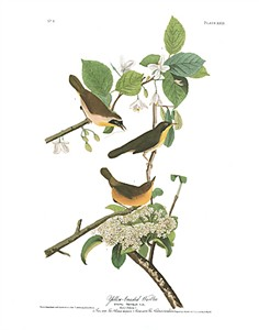 "John James Audubon Limited Centennial Edition Giclee on Paper:""Common Yellowthroat"""
