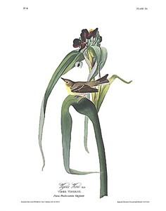 """John James Audubon Limited Centennial Edition Giclee on Paper:""""Pine Warbler"""""""