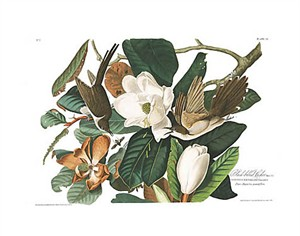 "John James Audubon Limited Centennial Edition Giclee on Paper:""Black-billed Cuckoo"""