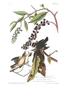 "John James Audubon Limited Centennial Edition Giclee on Paper:""Worm-eating Warbler"""