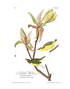 """John James Audubon Limited Centennial Edition Giclee on Paper:""""Kentucky Warbler"""""""