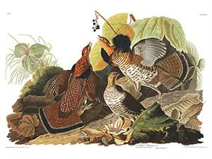 "John James Audubon Limited Centennial Edition Giclee on Paper:""Ruffed Grouse"""
