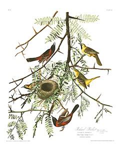 "John James Audubon Limited Centennial Edition Giclee on Paper:""Orchard Oriole"""