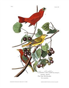 "John James Audubon Limited Centennial Edition Giclee on Paper:""Summer Tanager"""