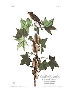 """John James Audubon Limited Centennial Edition Giclee on Paper:""""Willow Flycatcher"""""""