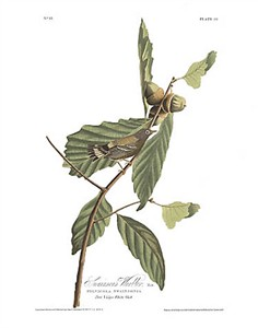 "John James Audubon Limited Centennial Edition Giclee on Paper:""Magnolia Warbler"""
