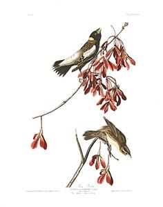 "John James Audubon Limited Centennial Edition Giclee on Paper:""Bobolink"""