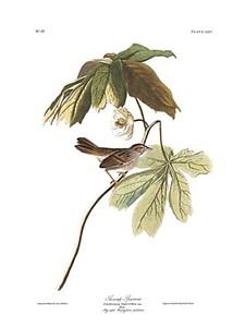 "John James Audubon Limited Centennial Edition Giclee on Paper:""Swamp Sparrow"""