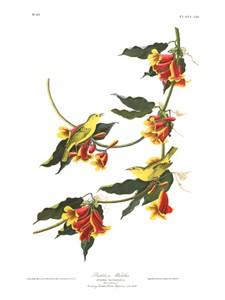 """John James Audubon Limited Centennial Edition Giclee on Paper:""""Yellow Warbler"""""""