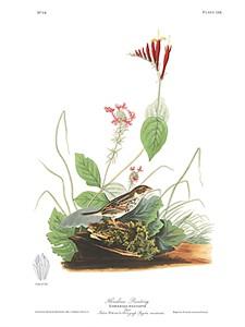 "John James Audubon Limited Centennial Edition Giclee on Paper:""Henslow's Sparrow"""