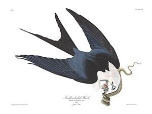 "John James Audubon Limited Centennial Edition Giclee on Paper:""Swallow-tailed Kite"""