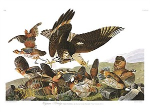 "John James Audubon Limited Centennial Edition Giclee on Paper:""Northern Bobwhite"""