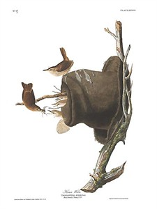 "John James Audubon Limited Centennial Edition Giclee on Paper:""House Wren"""