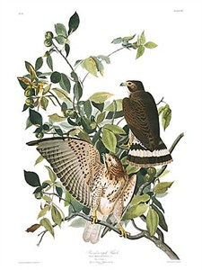 "John James Audubon Limited Centennial Edition Giclee on Paper:""Broad-winged Hawk"""