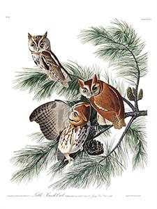 """John James Audubon Limited Centennial Edition Giclee on Paper:""""Eastern Screech-Owl"""""""