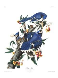 "John James Audubon Limited Centennial Edition Giclee on Paper:""Blue Jay"""