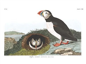 "John James Audubon Limited Centennial Edition Giclee on Paper:""Atlantic Puffin"""