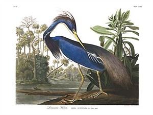 "John James Audubon Limited Centennial Edition Giclee on Paper:""Trocolored Heron"""