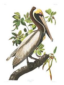 "John James Audubon Limited Centennial Edition Giclee on Paper:""Brown Pelican"""