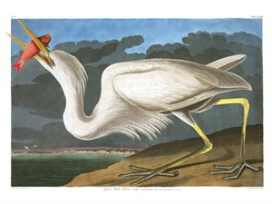 "John James Audubon Limited Centennial Edition Giclee on Paper:""Great Blue Heron"""