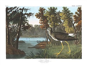 "John James Audubon Limited Centennial Edition Giclee on Paper:""Lesser Yellowlegs"""