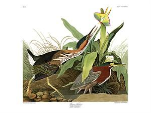 "John James Audubon Limited Centennial Edition Giclee on Paper:""Green Heron"""