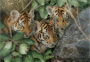 """Carl Brenders  Hand Signed and Numbered Limited Edition Giclee:""""Hide and Seek"""""""