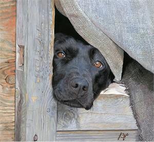 "John Bye Open Edition Giclée Canvas:""Let Me Out"""