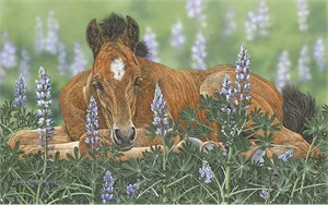 "Judy Larson Artist Signed Limited Edition Gallery Wrap Canvas Giclee:""Lounging in the Lupines"""