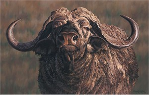"""Simon Combes  Hand Numbered Limited Edition Canvas Giclee: """"Menace (Cape Buffalo )"""""""