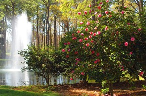 "Gerald Brimacombe Handsigned and Numbered Limited Edition Giclee on Paper:""Virginia - Norfolk Botanical Garden 9"""