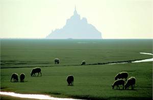 "Gerald Brimacombe Handsigned and Numbered Limited Edition Giclee on Paper:""France - Normandy - Mt. St. Michel with lambs"""