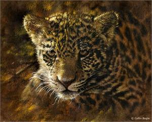 """Collin Bogle Handsigned and Numbered Limited Edition :""""Jaguar Cub"""""""