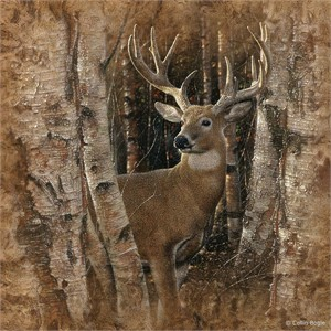 "Collin Bogle Handsigned and Numbered Limited Edition :""Birchwood Buck"""
