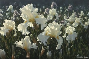 "Collin Bogle Handsigned and Numbered Limited Edition :""White Iris Garden"""