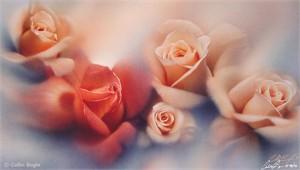 "Collin Bogle Handsigned and Numbered Limited Edition Print :""Rose Garden"""