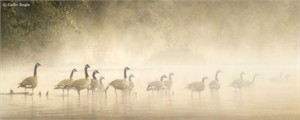"Collin Bogle Handsigned and Numbered Limited Edition :""Morning Mist"""