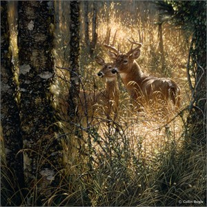 """Collin Bogle Handsigned and Numbered Limited Edition Giclee on Canvas :""""A Golden Moment"""""""