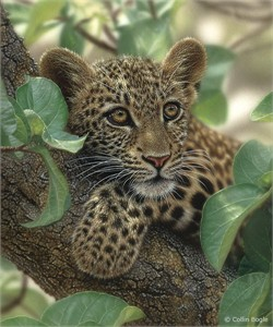 """Collin Bogle Handsigned and Numbered Limited Edition Print and Canvas: """"Tree Hugger"""""""
