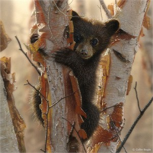 """Collin Bogle Handsigned and Numbered Limited Edition Print and Canvas: """"Curious Cub II"""""""