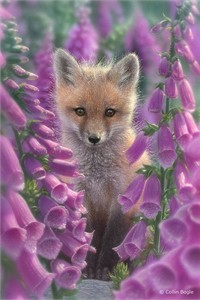 """Collin Bogle Handsigned and Numbered Limited Edition Print and Canvas:""""Foxgloves"""""""